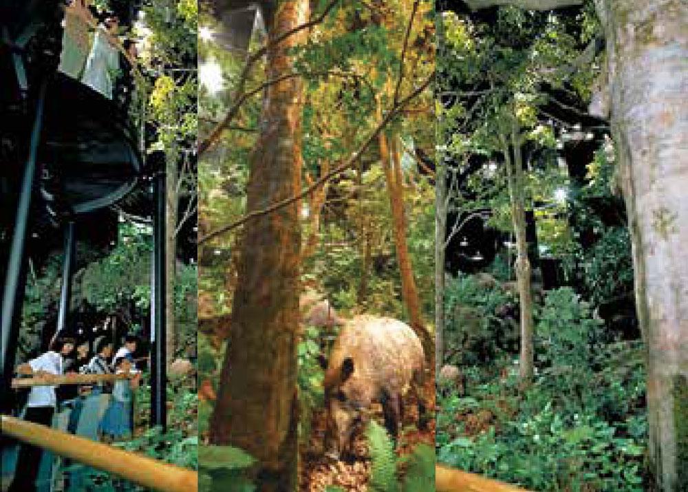 森のジオラマ