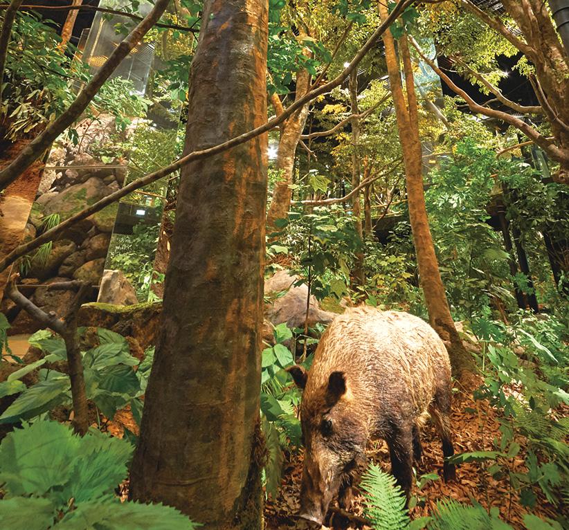 「森のジオラマ」